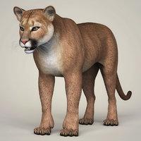 3D photorealistic cougar model