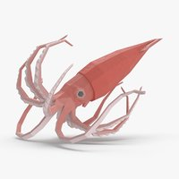 3D squid---floating