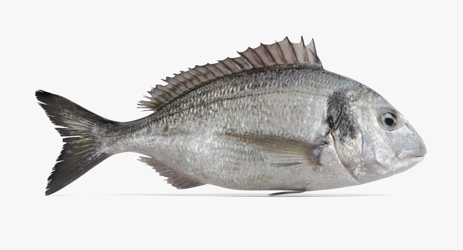 gilthead bream rigged 3D model