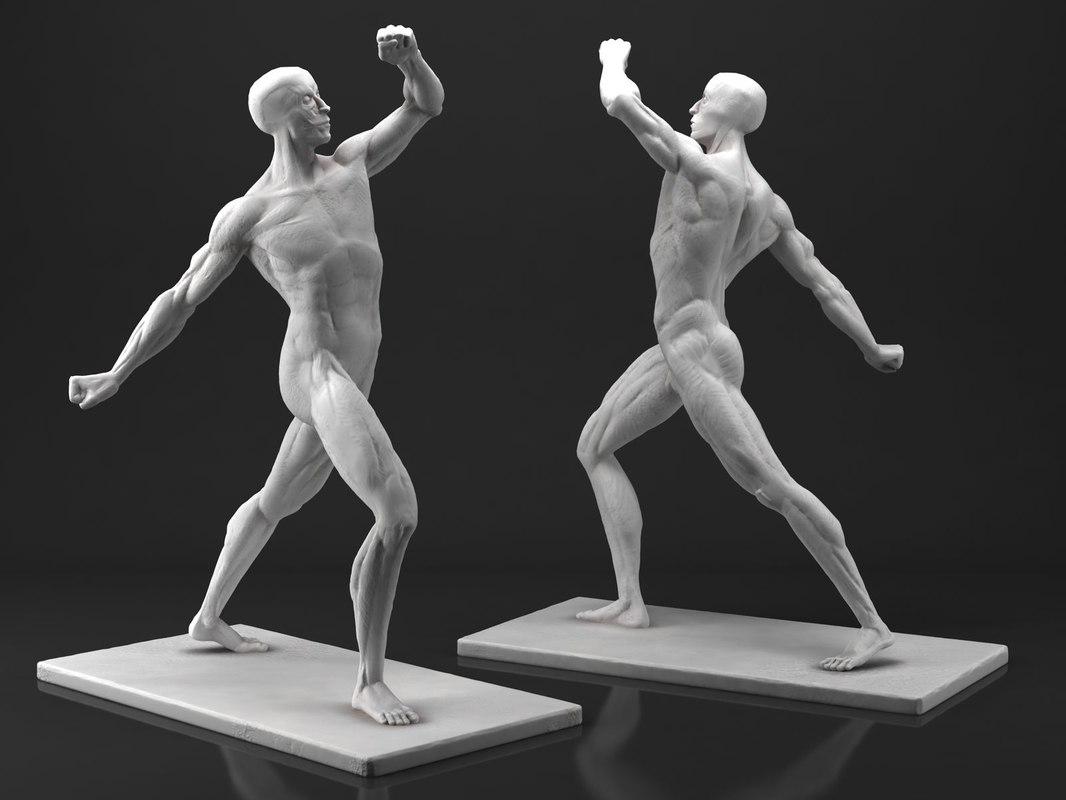 3D male anatomy sculpture