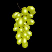 3D grape model