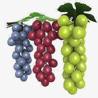 3D blue grapes model