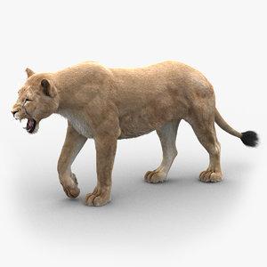 3D lioness 3 fur