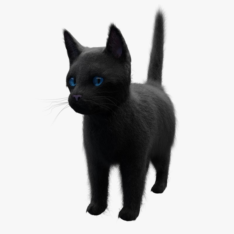 3D black cat model
