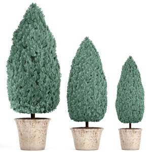 cupressus blue thuja 3D model