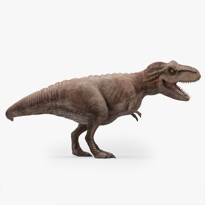 3D rigged rex tyrannosaurus