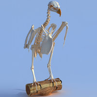 bald eagle skeletal 3D model