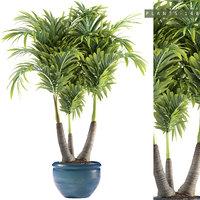 plants 148 palm 3D model