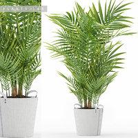 plants 149 palm model
