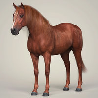 photorealistic horse animation 3D model