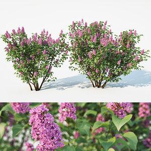 lilac model