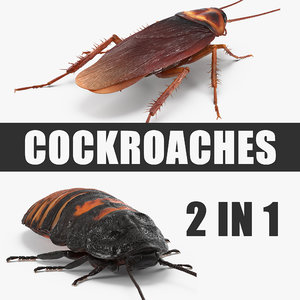 cockroaches madagascar realistic 3D model