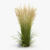 decorative grass karl foerster 3D model