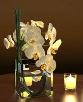 white orchids square vase 3D