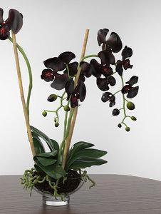 phalaenopsis orchid 3D model