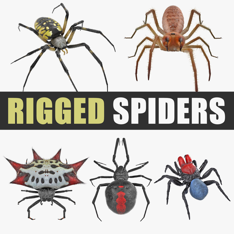 3D rigged spiders model