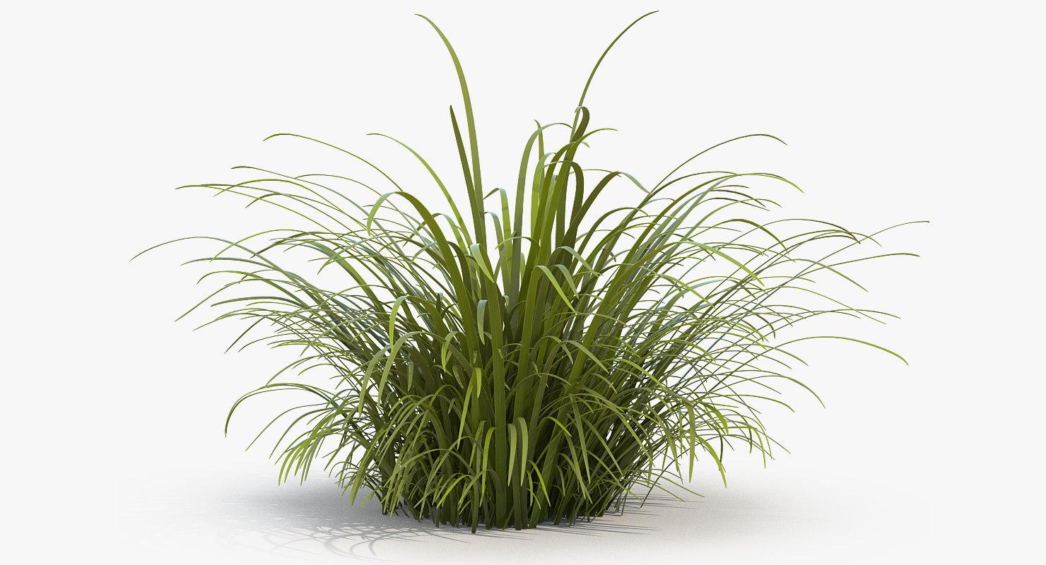 tall grass field hd wallpaper 3d wild tall grass field turbosquid 1225709