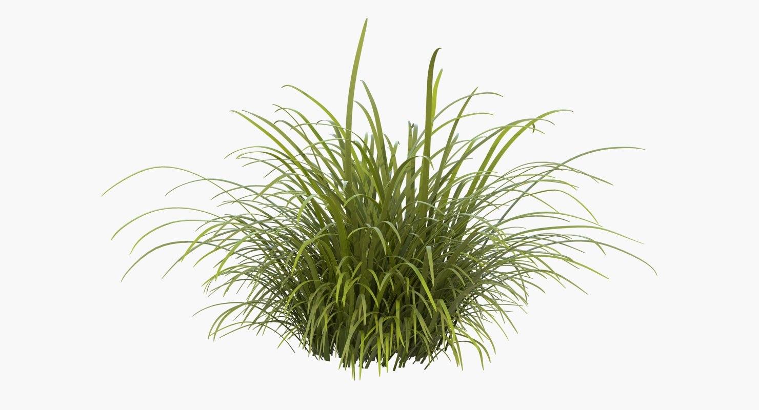 tall grass field green 3d wild tall grass field turbosquid 1225709