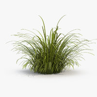 3D wild tall grass field