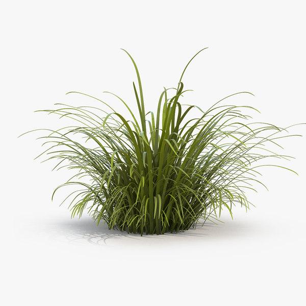 3D wild tall grass field