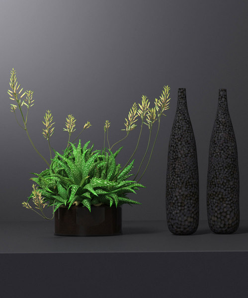 3D model succulent plant decoration