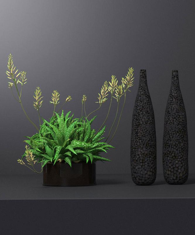 3D model succulent plant decoration