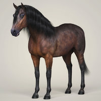 3D photorealistic horse animation model