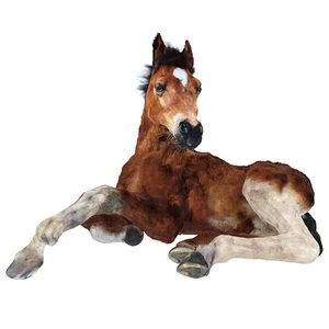 3D foal