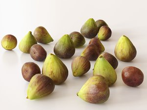 figs 3D model
