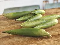 3D corn green leaves