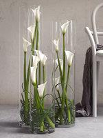 3D calla lilies set