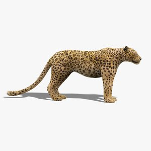 3D leopard fur model