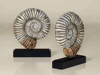 3D fossil iron-marble shell sculpture model