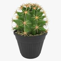 baby ferocactus glaucescens model