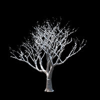 3D winter tree 010