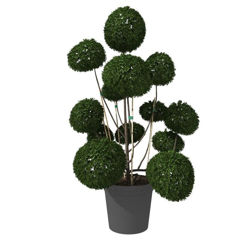 3D bush buxus pot styled model