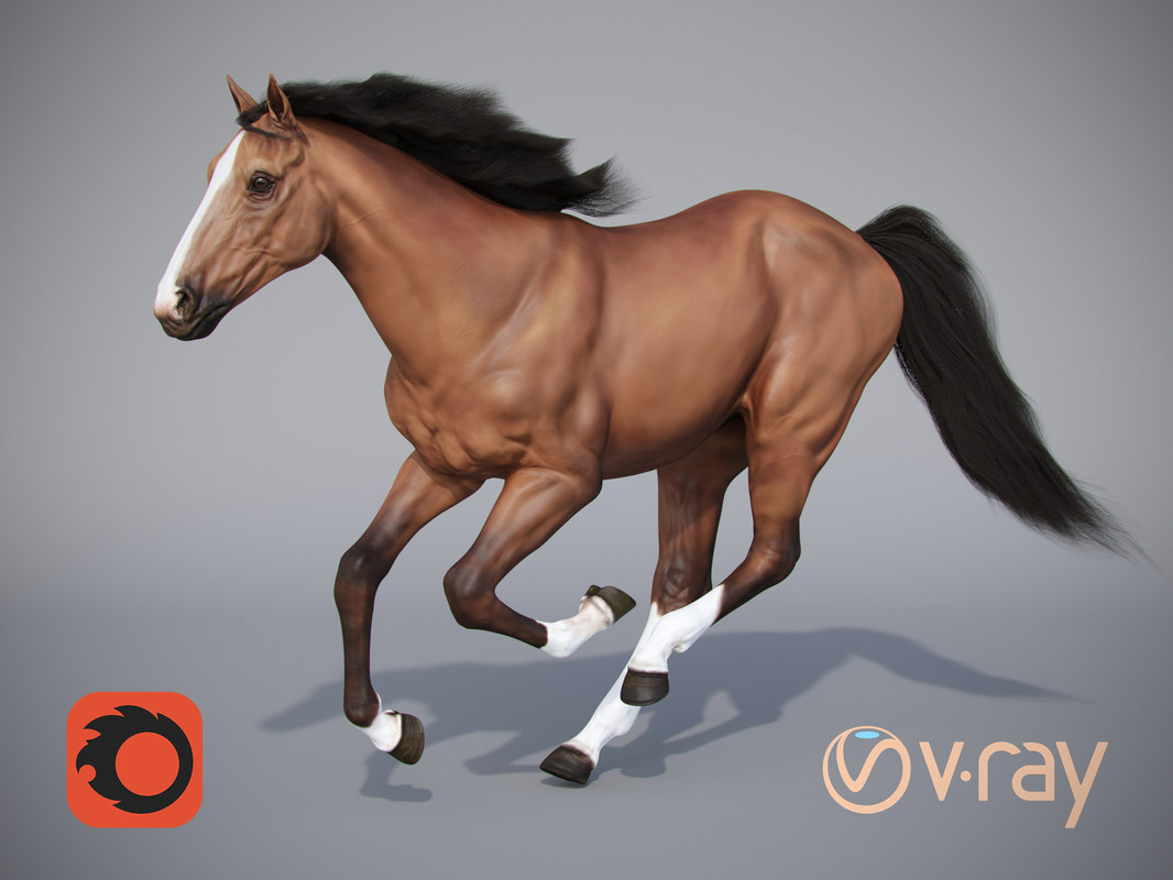 horse positions 3D model