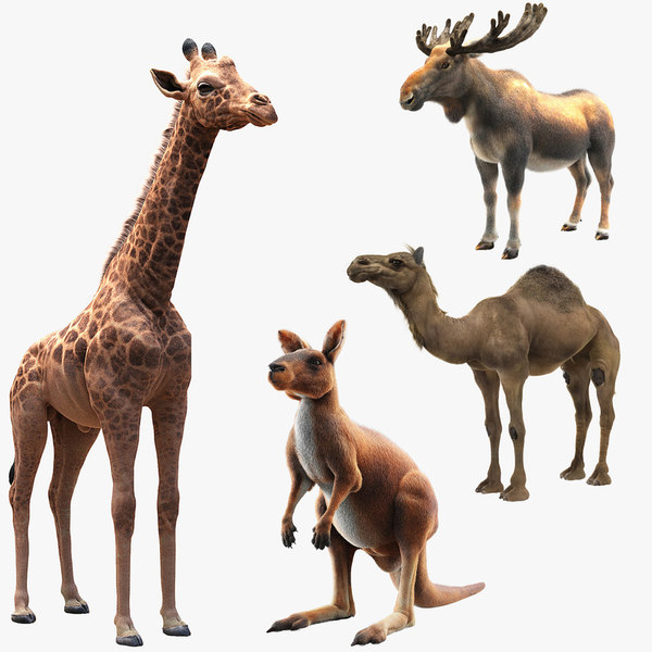 3D animals giraffe camel