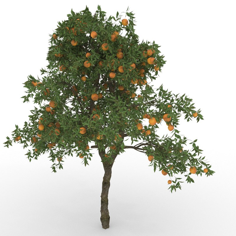 3D orange citrus sinensis