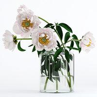 3D realistic peones flowers