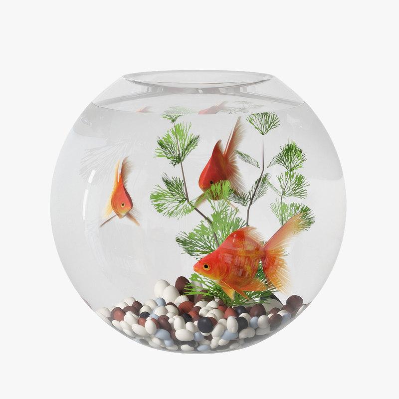 aquarium goldfish 3D model