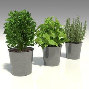 3D model herbs pots