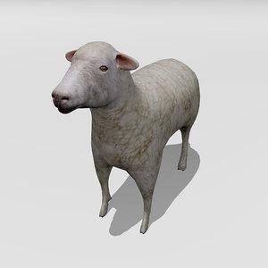 3D lamb model