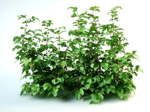 3D raspberry bushes