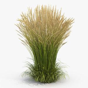 calamagrostis karl foerster grass model