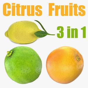 citrus fruits 3D model