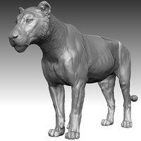 3D lion zbrush