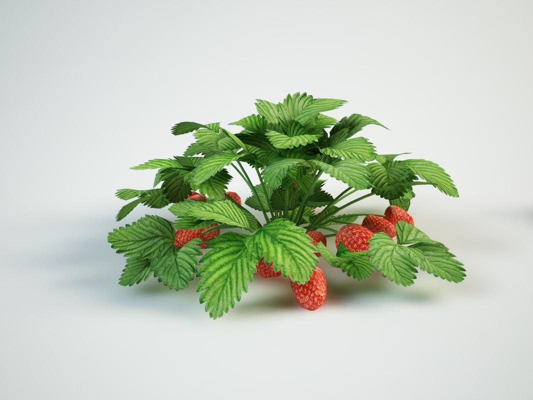 strawberry berries 3D model