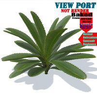 aloe vera plant 3D model
