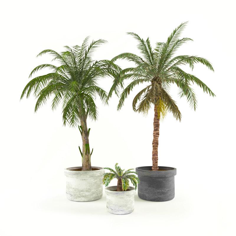 palms 3D model